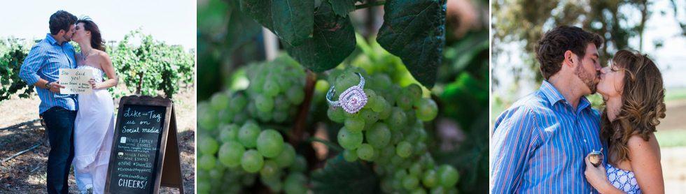 Central Coast Vineyard Proposal 5