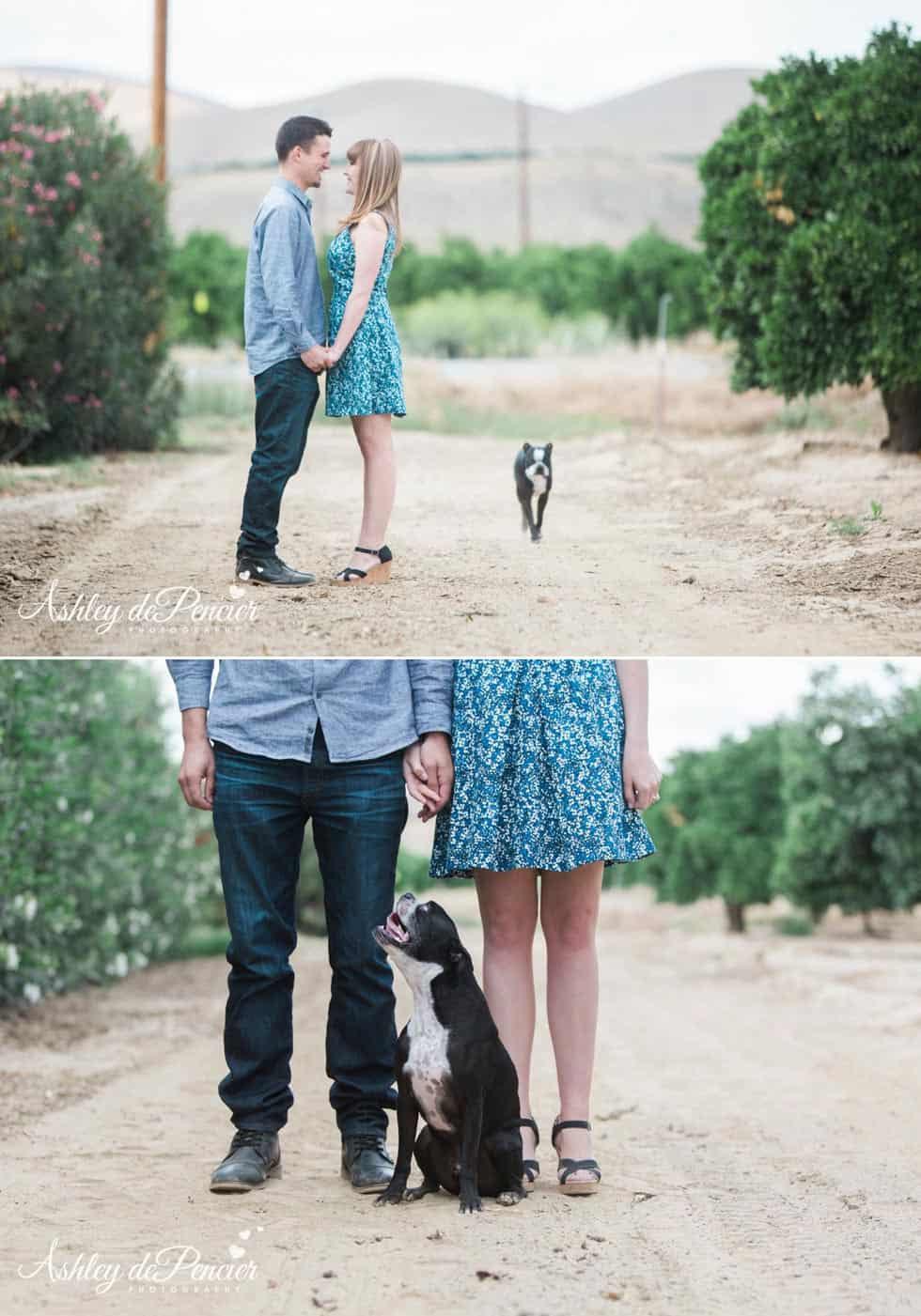 Engagement portraits taken in Orange Grove, California